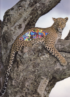 http://mail.coupeletat.org/files/gimgs/th-5_5_leopard.png